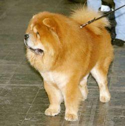 Самые красивые собаки — рейтинг самых красивых пород собак  Dog_05