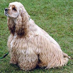 Самые красивые собаки — рейтинг самых красивых пород собак  Dog_07