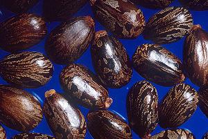 Касторовые бобы