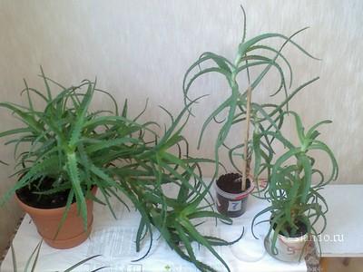 Теплолюбивые цветущие растения фото