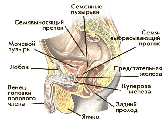 domashnee-porno-foto-zhena-v-sperme