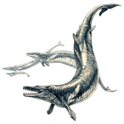 Базилозавр, Басилозавр