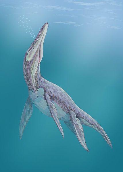 Мегалнеузавр